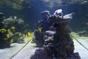 Hangend aquarium