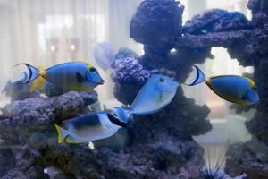 11th floor aquarium