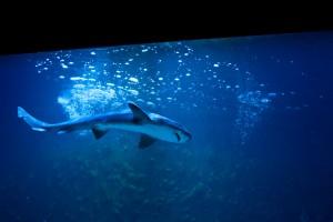 Haaienaquarium